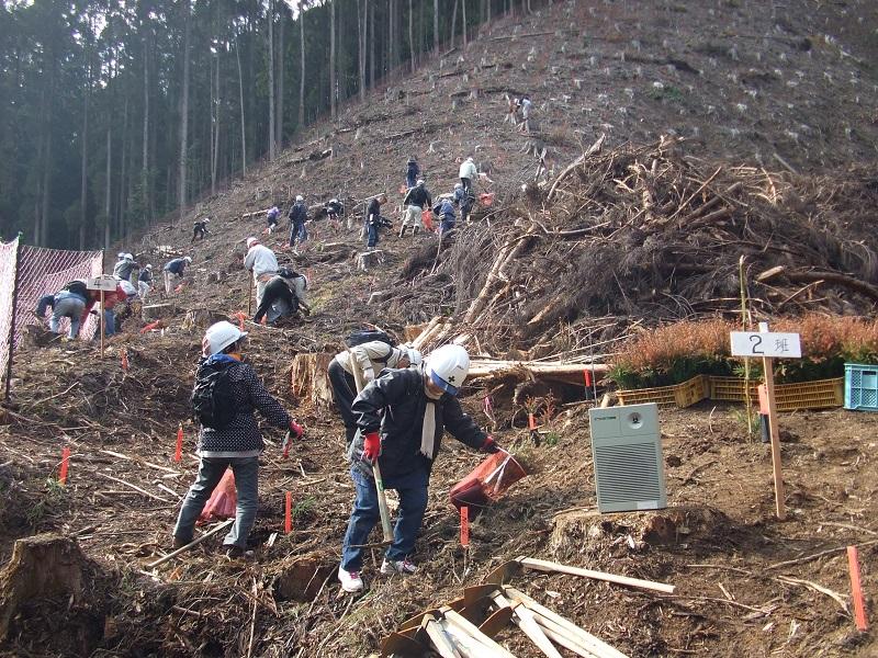森林ボランティア3