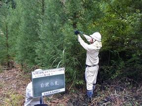 苗木の生産4